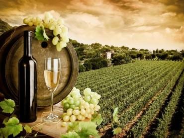 Industrija vina u Srbiji: od proizvodnje do distribucije