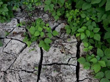 Organski hidrogel ima potencijal da promeni poljoprivredu